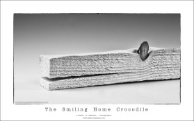 Home Crocodile