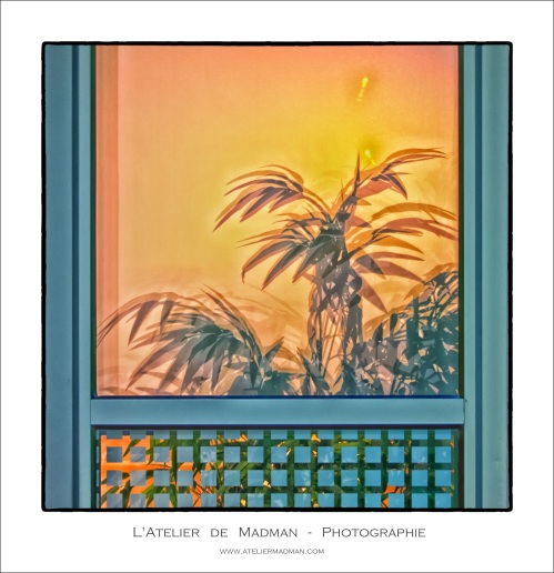 201306-PalmTrees-1
