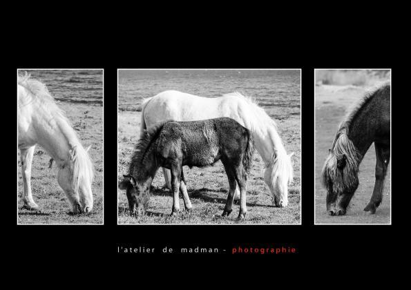 L'ATELIER DE MADMAN - PHOTOGRAPHIE - HOLY ISLE