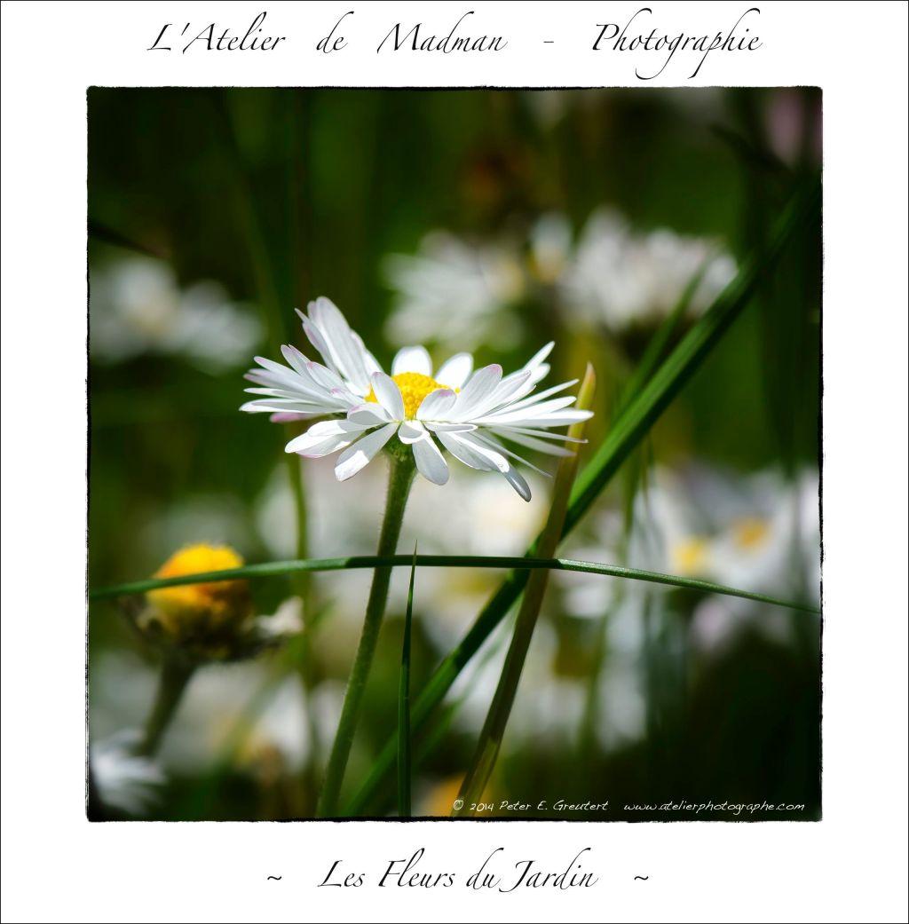 L'ATELIER DE MADMAN - PHOTOGRAPHIE - FLEURS