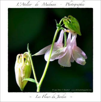 L'ATELIER DE MADMAN - MACROPHOTOGRAPHIE