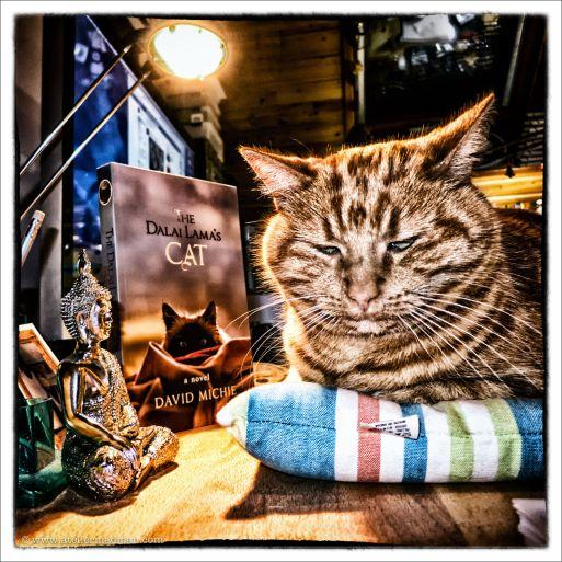 L'ATELIER DE MADMAN – PHOTOGRAPHIE – ANIMAUX