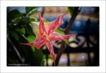 Flower – PharpingNepal